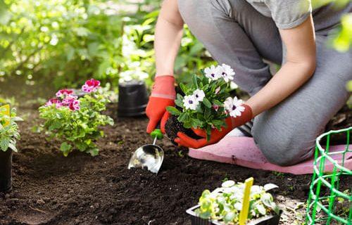 rewitalizacje starszych zalozen ogrodowych