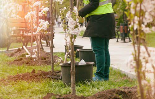sadzenie-drzew
